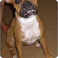 Adopt A Pet :: Tinkerbell - Savannah, GA
