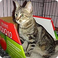 Adopt A Pet :: Tina Louise - Escondido, CA