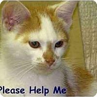 Adopt A Pet :: Squeeker - Maxwelton, WV