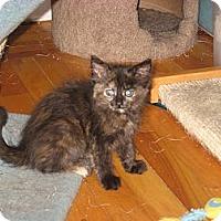 Adopt A Pet :: Fiona - Portland, ME
