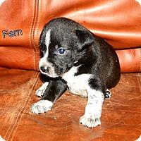 Adopt A Pet :: Fern - Austin, TX