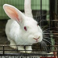 Adopt A Pet :: Magic - Livermore, CA