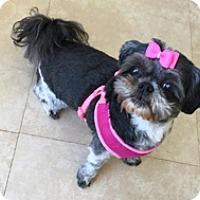 Adopt A Pet :: BABEEBELLA - Melbourne, FL