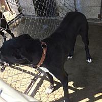 Adopt A Pet :: rocky - Alturas, CA
