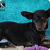 Adopt A Pet :: ADELE - Tomball, TX