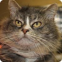 Adopt A Pet :: PHIL - Clayton, NJ