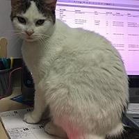 Adopt A Pet :: MacKenzie - Columbus, OH