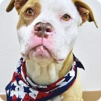 Adopt A Pet :: Sawyer - Dublin, CA