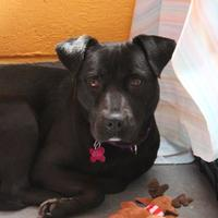 Adopt A Pet :: Lilly In Foster - Hopkinton, MA