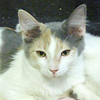 Adopt A Pet :: Taffy - Phoenix, AZ