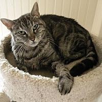 Adopt A Pet :: Molly - Anacortes, WA