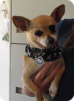 Chihuahua Dog for adoption in Creston, California - Hiro