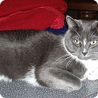 Adopt A Pet :: COURTESY LISTING_Popeye - Columbia, MD