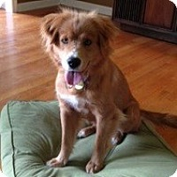 Adopt A Pet :: Sarah - Brattleboro, VT