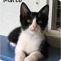 Adopt A Pet :: MARCO - AUSTIN, TX
