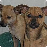 Adopt A Pet :: Tradition - Seattle, WA
