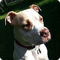 Adopt A Pet :: Belle - Oak Creek, WI