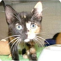 Adopt A Pet :: Lilly - Winter Haven, FL