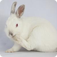 Adopt A Pet :: Good Vibrations - Los Angeles, CA