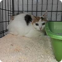 Adopt A Pet :: Debra-$20! - Stanton, MI
