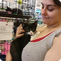 Adopt A Pet :: Theron - Avon, OH