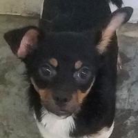 Adopt A Pet :: Faline - Paducah, KY