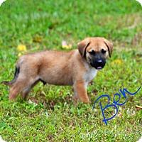 Adopt A Pet :: Ben - Lebanon, MO