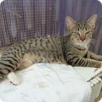 Adopt A Pet :: Jubilee - Calimesa, CA