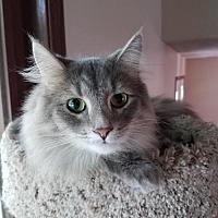Adopt A Pet :: Skippur - Princeton, MN