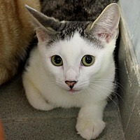 Adopt A Pet :: Ferrari (Manhattan) - New York, NY