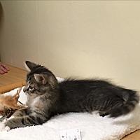 Adopt A Pet :: Uriah - Sarasota, FL