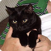 Adopt A Pet :: Angel--urgent home needed - Scottsdale, AZ