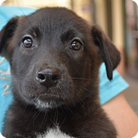 Adopt A Pet :: Burgundy - Scottsdale, AZ