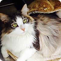 Adopt A Pet :: Cassie - Newport Beach, CA