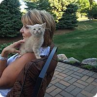 Adopt A Pet :: Kingsley - Sterling Hgts, MI