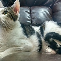 Adopt A Pet :: Toby - Fredericksburg, VA