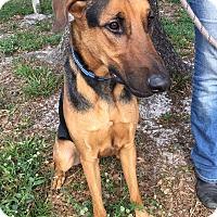 Adopt A Pet :: NEMO - Palm City, FL
