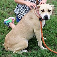 Adopt A Pet :: Pauline - Pluckemin, NJ