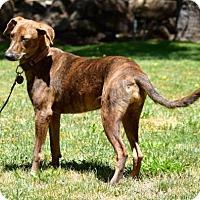 Adopt A Pet :: Brenda - Penngrove, CA