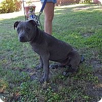 Adopt A Pet :: Cujo (has been adopted) - Hagerstown, MD