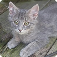 Adopt A Pet :: Rayna - Morgantown, WV