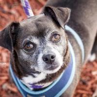 Adopt A Pet :: Pubs - Gainesville, FL