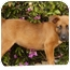 Photo 4 - German Shepherd Dog Mix Puppy for adoption in Los Angeles, California - Coral von Lawall