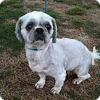 Adopt A Pet :: Aggie - Southampton, PA