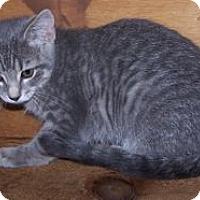 Adopt A Pet :: K-Lillian1-April - Colorado Springs, CO