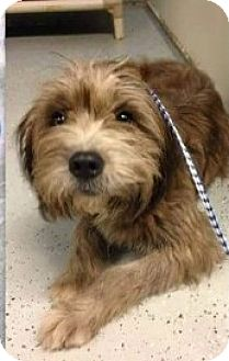 Terrier (Unknown Type, Medium) Mix Dog for adoption in Hampton, Virginia - PUDDING