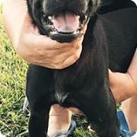 Adopt A Pet :: Ash - Princeton, KY