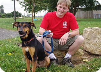 Shepherd (Unknown Type)/Hound (Unknown Type) Mix Dog for adoption in Elyria, Ohio - Miley