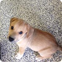 Adopt A Pet :: Shane - Washington, PA