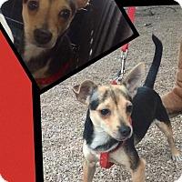 Adopt A Pet :: Hank - Scottsdale, AZ